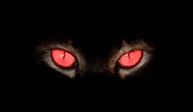 在某事的动物眼睛凝视在黑色 库存照片