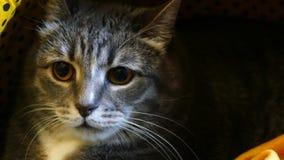 在某事的猫嘘声 股票录像