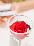 在柔光的红色玫瑰 库存照片