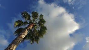在柔和的热带微风的晴朗的棕榈树 股票视频
