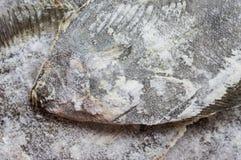 在柜台的冷冻鱼异体类 免版税库存照片