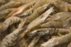在柜台的新鲜的虾 免版税图库摄影
