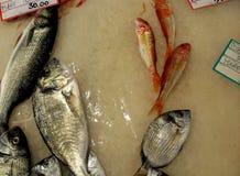 在柜台的梭鱼 免版税库存图片