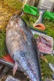 在柜台的金枪鱼在鱼市上 库存照片