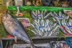 在柜台的金枪鱼在鱼市上 免版税图库摄影