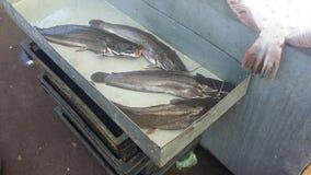 在柜台的鱼 库存照片