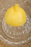 在柠檬剥削者的柠檬 免版税图库摄影