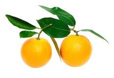 在查出的白色的橙色果子 免版税库存图片