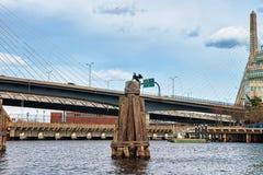 在查尔斯河和Zakim桥梁波士顿麻省的黑Gannet 免版税库存照片