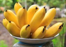 在柬埔寨香蕉种植的束,东南亚 免版税库存照片