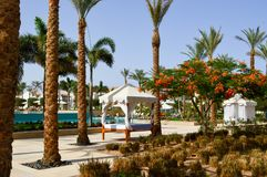 在柱子的带金线绣花丝织品白色机盖在床上和在热带温暖的海的棕榈树依靠,休息 图库摄影