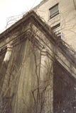 在柱子的藤 免版税库存图片