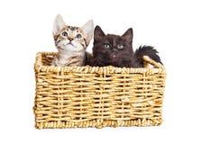 在柳条筐的两只逗人喜爱的小猫 免版税图库摄影