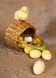 在柳条筐的复活节小鸡 免版税图库摄影