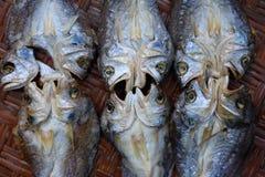 在柳条筐的干咸鱼 免版税库存图片