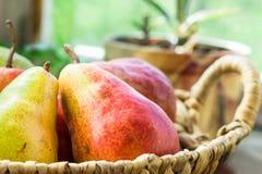 在柳条筐的成熟红色有机梨在庭院由窗口的厨房用桌上,盆的花,软的白天,舒适大气 免版税图库摄影