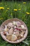 在柳条筐的捷克复活节姜饼用黄色开花的蒲公英开花,可笑兔宝宝 库存图片