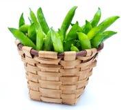 在柳条筐的新鲜和未加工的绿豆 库存图片