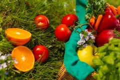 在柳条筐的新鲜的有机蔬菜在庭院里 免版税库存照片