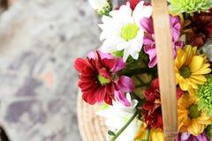在柳条筐的菊花花 图库摄影