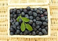 在柳条筐的蓝莓 免版税库存图片