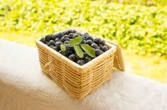 在柳条筐的蓝莓 库存图片