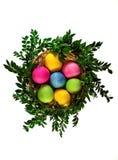 在柳条筐的被隔绝的复活节彩蛋与绿色分支 顶视图 免版税库存图片