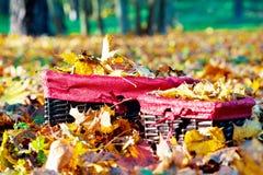 在柳条筐的金黄秋天 黄色槭树叶子堆  库存照片