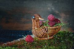 在柳条筐的鲜美成熟莓以在美丽的绿色青苔的一只鸭子的形式 复制地方 库存照片