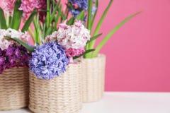 在柳条罐的美丽的风信花在反对颜色背景的桌上 下雨 免版税库存照片