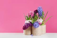 在柳条罐的美丽的风信花在反对颜色背景,文本的空间的桌上 库存图片
