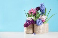 在柳条罐的美丽的风信花在反对颜色背景,文本的空间的桌上 免版税库存图片