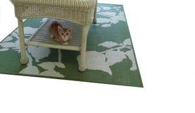 在柳条表下的橙色平纹小猫 免版税库存图片