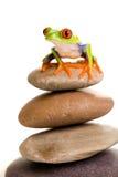 在栈的红眼睛的雨蛙岩石 免版税库存图片