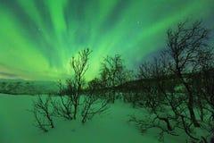 在树上的北极光在一个冬天环境美化 库存图片