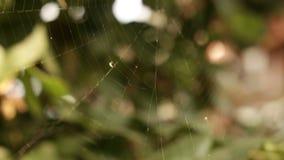 在树上的蜘蛛网 股票录像