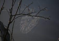 在树上的蜘蛛网 库存照片