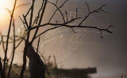 在树上的蜘蛛网 免版税库存图片