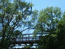 在树上面机盖的桥梁 库存照片