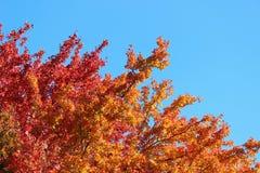 在树上面的秋天叶子五颜六色的秋叶 免版税库存图片