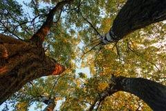 在树下在秋天的森林里 图库摄影
