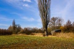 在树下的小屋由在布拉格边缘的绿色领域  免版税库存照片