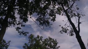 在树下的暗影 图库摄影
