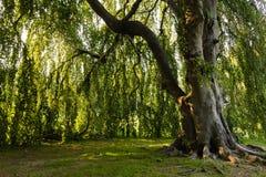 在树下3的叶子 免版税库存照片