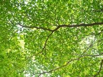 在树下 免版税库存图片