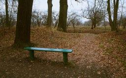 在树丛的长凳 免版税库存图片