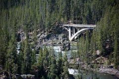 在树中的一座桥梁 库存照片