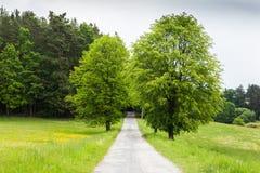 在树中的乡下路 免版税库存图片