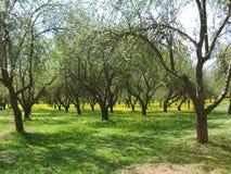 在树中的开花的蒲公英在城市停放 免版税库存图片