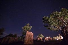 在树中的越野汽车 库存图片